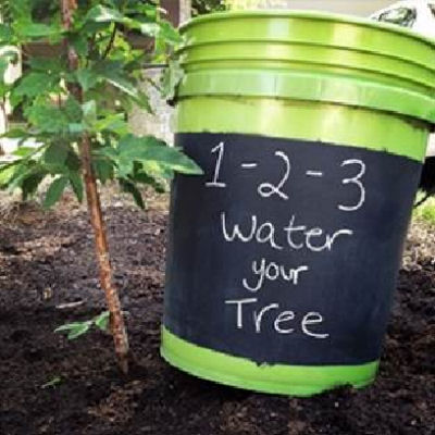 wateryourtree