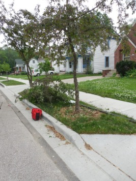 Lynn & Don's tree on Lawn (3)