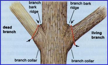 proper_pruning_cuts