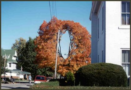 pruning_utility_lines1