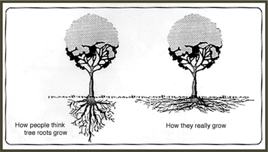 rootgrowth