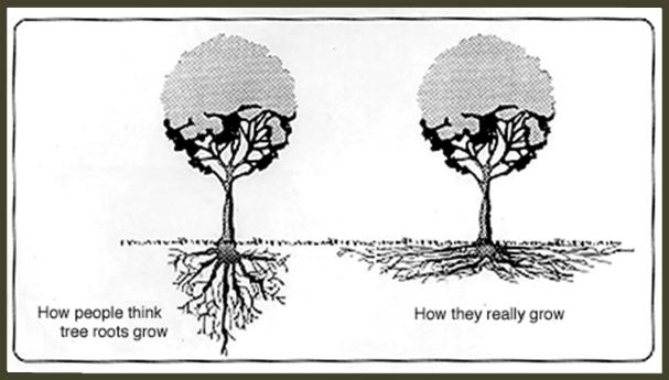 rootgrowth