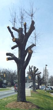 topped_trees2