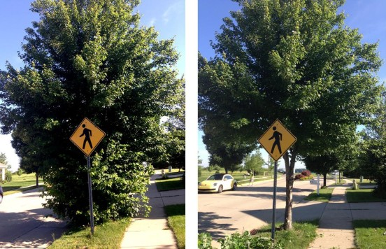 tree pruned before and after